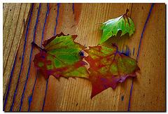 3 Blätter
