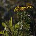20111015 6588RAw [D-PB] Blütenpflanze