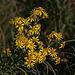 20111015 6578RAw [D-PB] Blütenpflanze