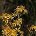 20111015 6576RAw [D-PB] Blütenpflanze