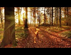 Fée de forêt (chiche)