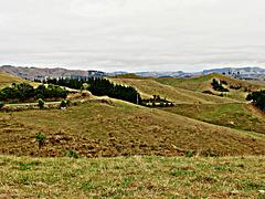 Ngaroma Hills