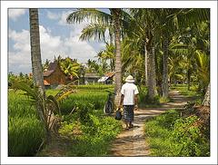 Le chemin des rizières..