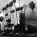 Great L.A. Walk (1389A)