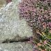 Sennen Cove - Cornwall 110907