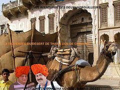 Camel of the Silk Road