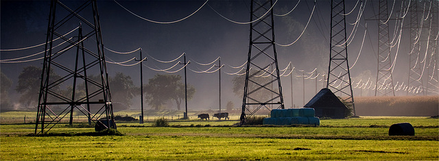 electro_cows