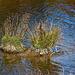 20111015 6564RAw [D-PB] Steinhorster Becken
