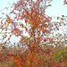 Koloroj de la aŭtuno 4
