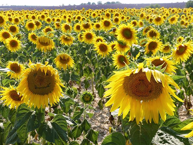 ...du soleil pour une belle semaine...