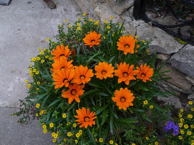 les dernières fleurs de mon petit chez moi