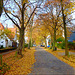 autumn in our street