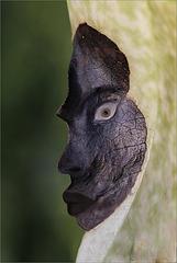 Le masque du Troll