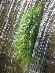 Kraut im Wasser