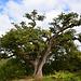 Encore un bel arbre!!!!