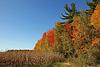 L'automne à son plus beau