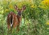 Bambi est curieux