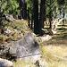 Wald - Schneckenpost