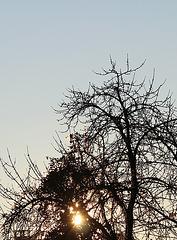 lumière du matin dans un cerisier (3)