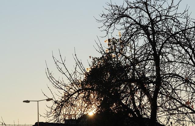 lumière du matin dans un cerisier (4)