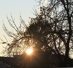 lumière du matin dans un cerisier