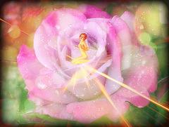 la rose d'un jour et la femme pour toujours a qui offre son amour