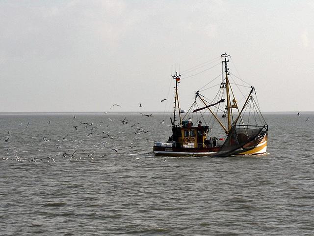 IMG 2831 Krabbenkutter