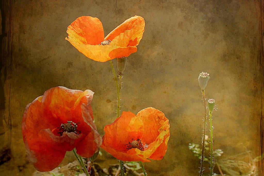 Une fleur par jour.... - Page 4 11659708.ae2acbb9.1024