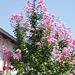 Mostar floras
