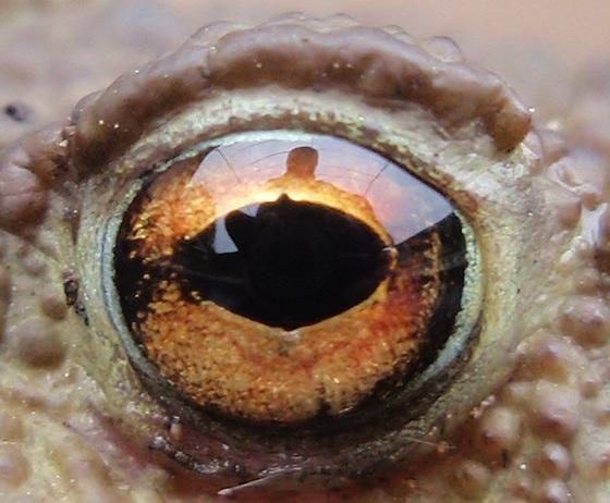oeil de saurien PB083818-2