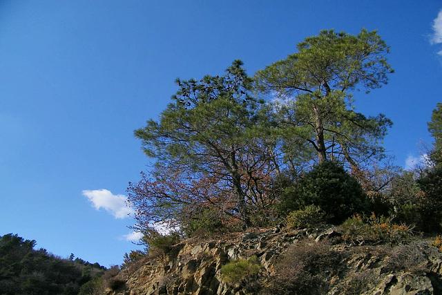 Sur le ciel bleu