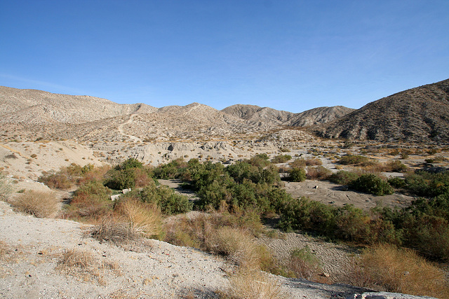 Little Morongo Canyon (2354)