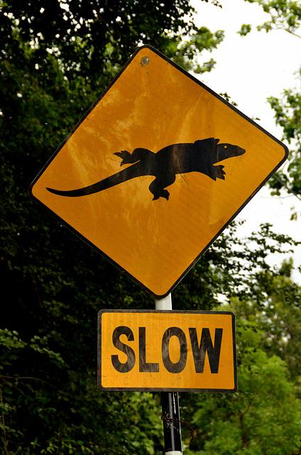 Iguana Road
