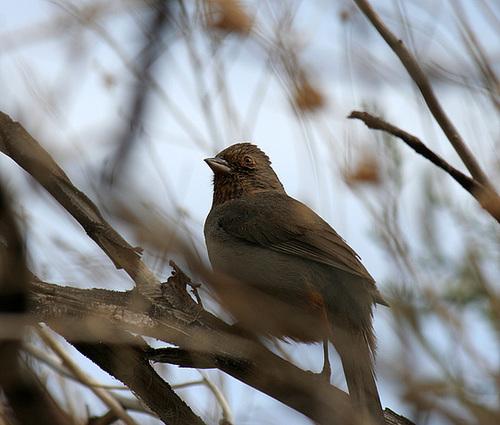 Bird in Big Morongo Canyon Preserve (2425)
