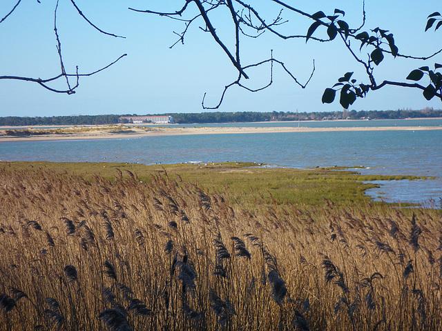 Zone d'observation des canards...