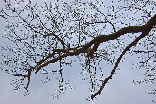 20120128 7070RAw [D~LIP] Baum, Landschaftsgarten, Bad Salzuflen