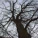 20120128 7071RAw [D~LIP] Baum, Landschaftsgarten, Bad Salzuflen