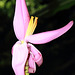 Fleurs de bananier décorative