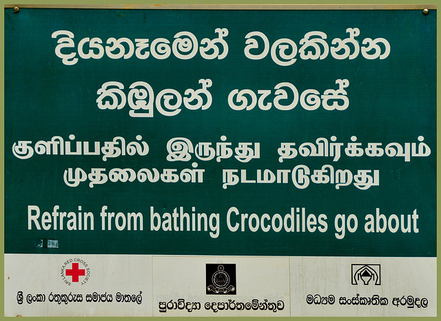 Swimming with the crocs?