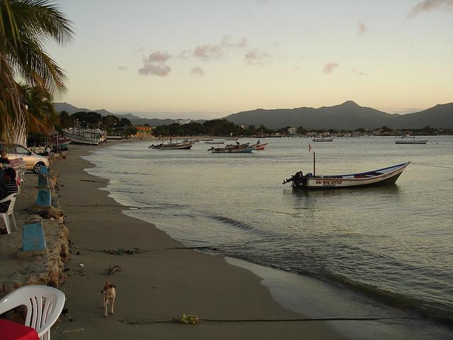 Beach dog / Chien de plage / Playa y perro - Margarita island / Venezuela.