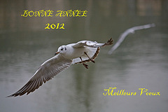 IMG 1507 Mouette voeux 2012