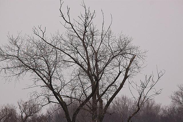 20120303 7545RTw [D-PB] Baum (500 mm)