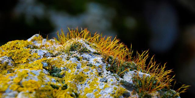 Pierre colonisée par de la mousse et du lichen