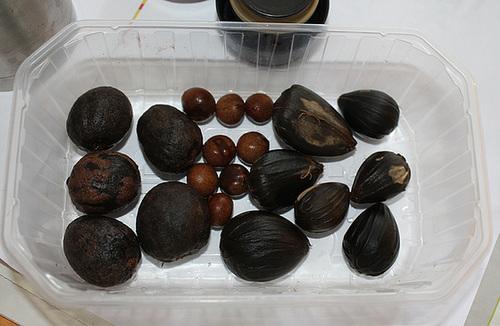 Trempage graines Palmiers (2)