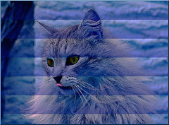 Le chat qui s'en va tout seul de Rudyard Kipling