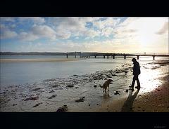 Ein Mann, ein Hund und das Meer ~