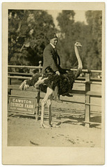 Rajah Shriner at the Cawston Ostrich Farm, South Pasadena, Calif.