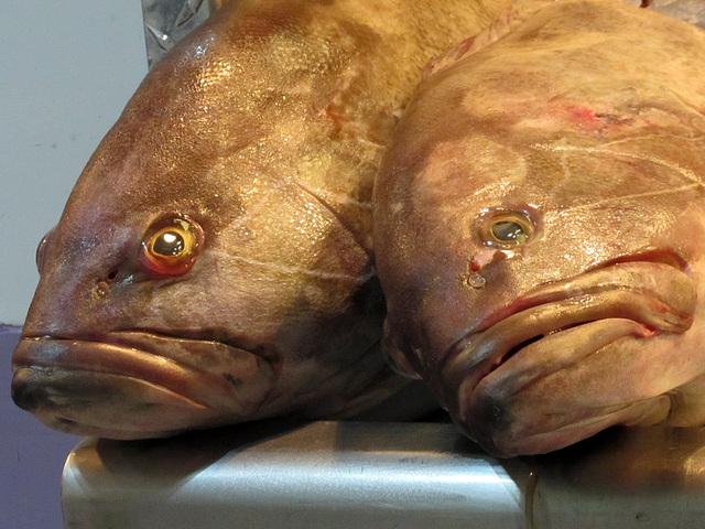 IMG 4572 Fische (Dorsch?)