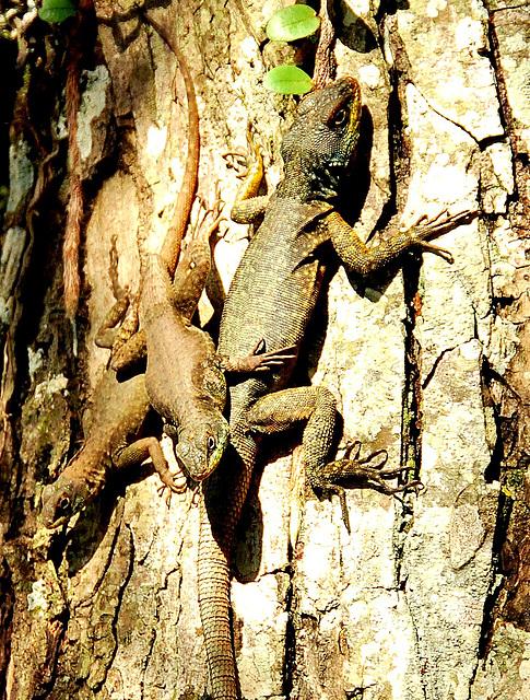 Three lizard tree