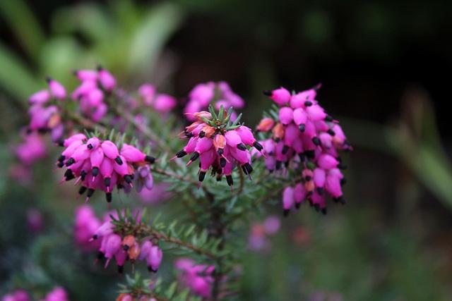 recherche id es de fleurs d 39 hiver pour bordure l 39 ombre au jardin forum de jardinage. Black Bedroom Furniture Sets. Home Design Ideas